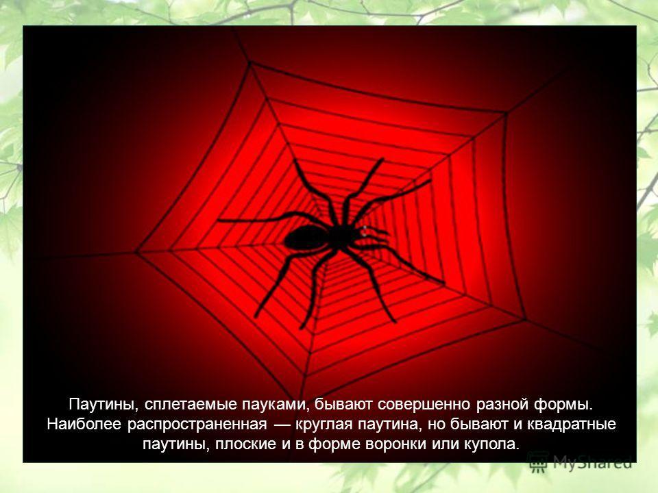 Паутины, сплетаемые пауками, бывают совершенно разной формы. Наиболее распространенная круглая паутина, но бывают и квадратные паутины, плоские и в форме воронки или купола.