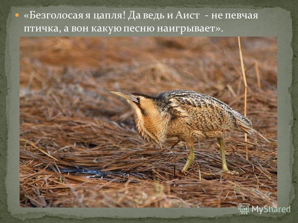 «Безголосая я цапля! Да ведь и Аист - не певчая птичка, а вон какую песню наигрывает».