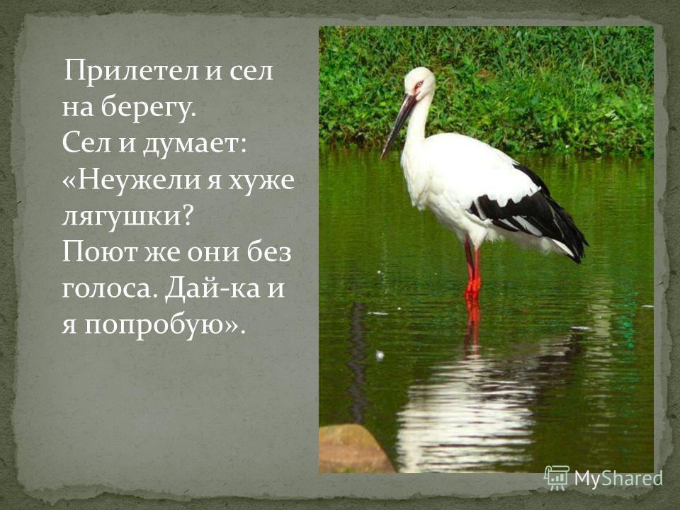 Прилетел и сел на берегу. Сел и думает: «Неужели я хуже лягушки? Поют же они без голоса. Дай-ка и я попробую».