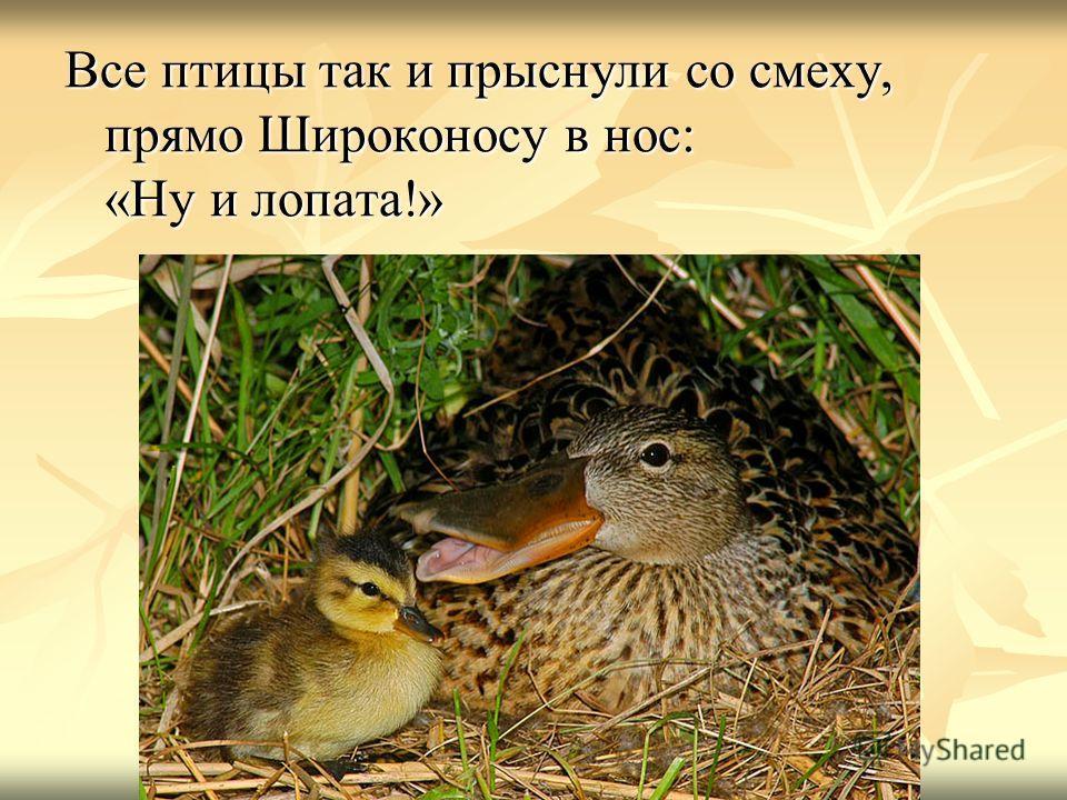 Все птицы так и прыснули со смеху, прямо Широконосу в нос: «Ну и лопата!»