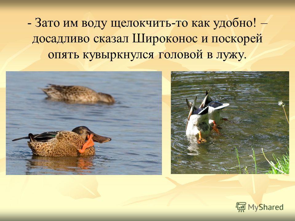 - Зато им воду щелокчить-то как удобно! – досадливо сказал Широконос и поскорей опять кувыркнулся головой в лужу.