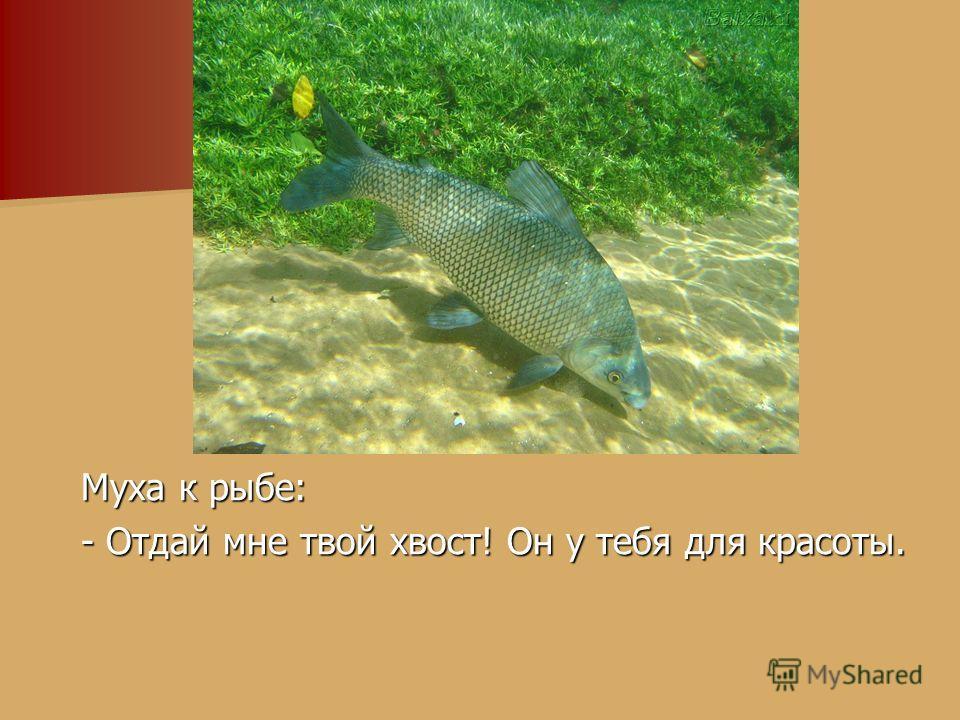 Муха к рыбе: Муха к рыбе: - Отдай мне твой хвост! Он у тебя для красоты. - Отдай мне твой хвост! Он у тебя для красоты.