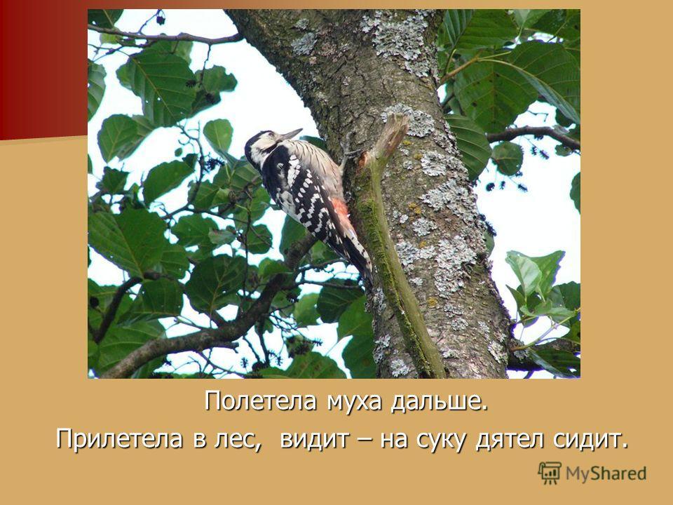 Полетела муха дальше. Полетела муха дальше. Прилетела в лес, видит – на суку дятел сидит.