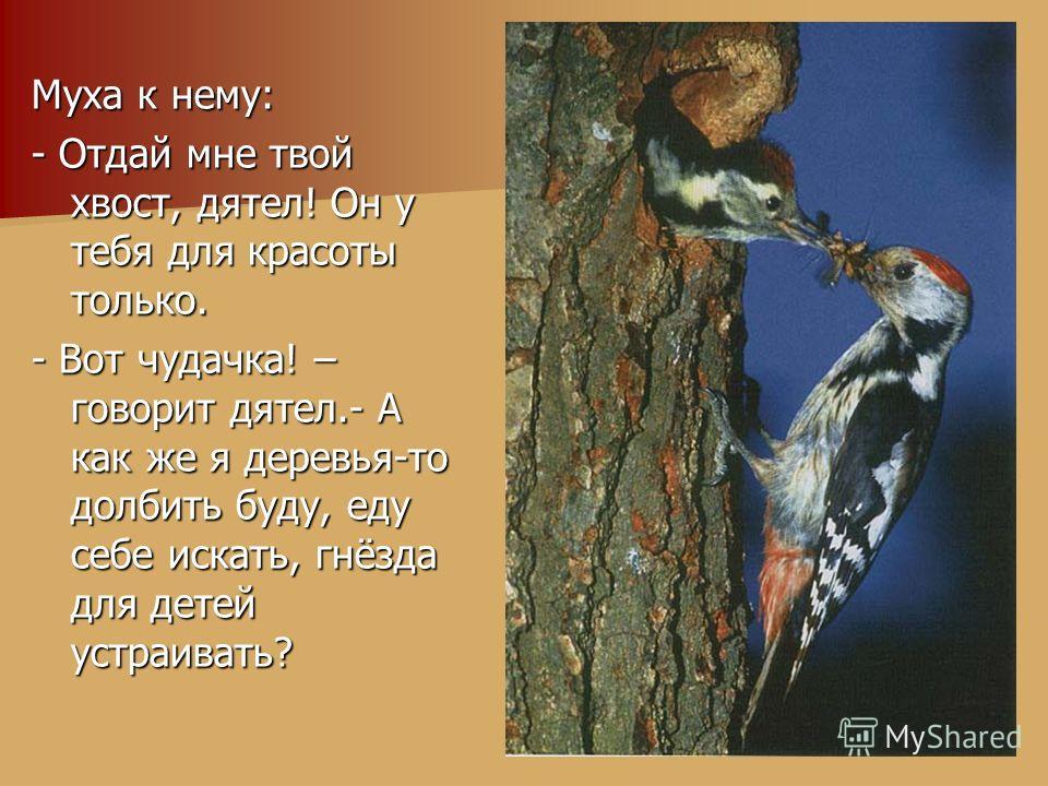 Муха к нему: - Отдай мне твой хвост, дятел! Он у тебя для красоты только. - Вот чудачка! – говорит дятел.- А как же я деревья-то долбить буду, еду себе искать, гнёзда для детей устраивать?