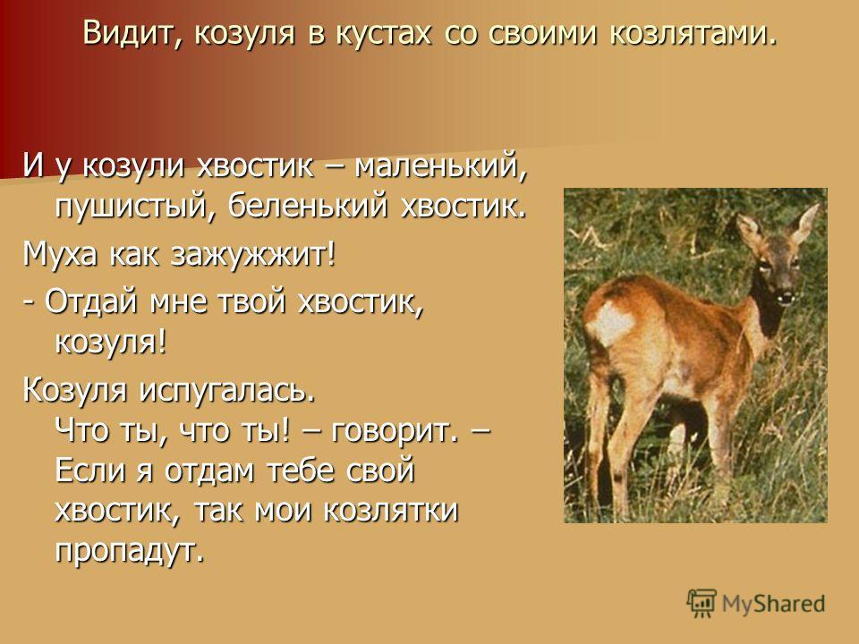 Видит, козуля в кустах со своими козлятами. И у козули хвостик – маленький, пушистый, беленький хвостик. Муха как зажужжит! - Отдай мне твой хвостик, козуля! Козуля испугалась. Что ты, что ты! – говорит. – Если я отдам тебе свой хвостик, так мои козл
