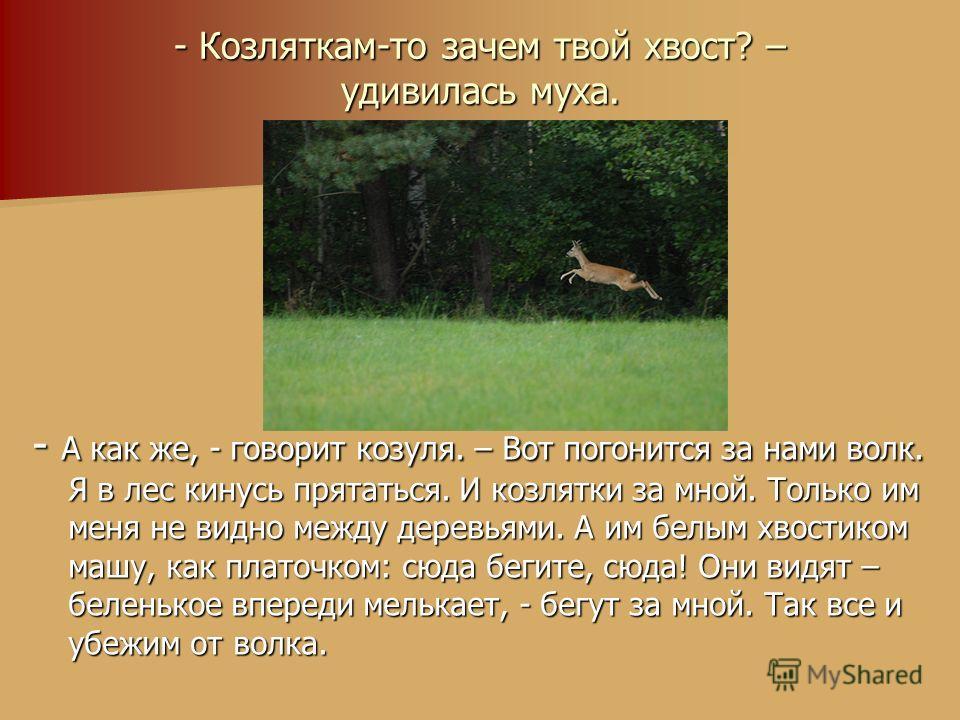 - Козляткам-то зачем твой хвост? – удивилась муха. - А как же, - говорит козуля. – Вот погонится за нами волк. Я в лес кинусь прятаться. И козлятки за мной. Только им меня не видно между деревьями. А им белым хвостиком машу, как платочком: сюда бегит