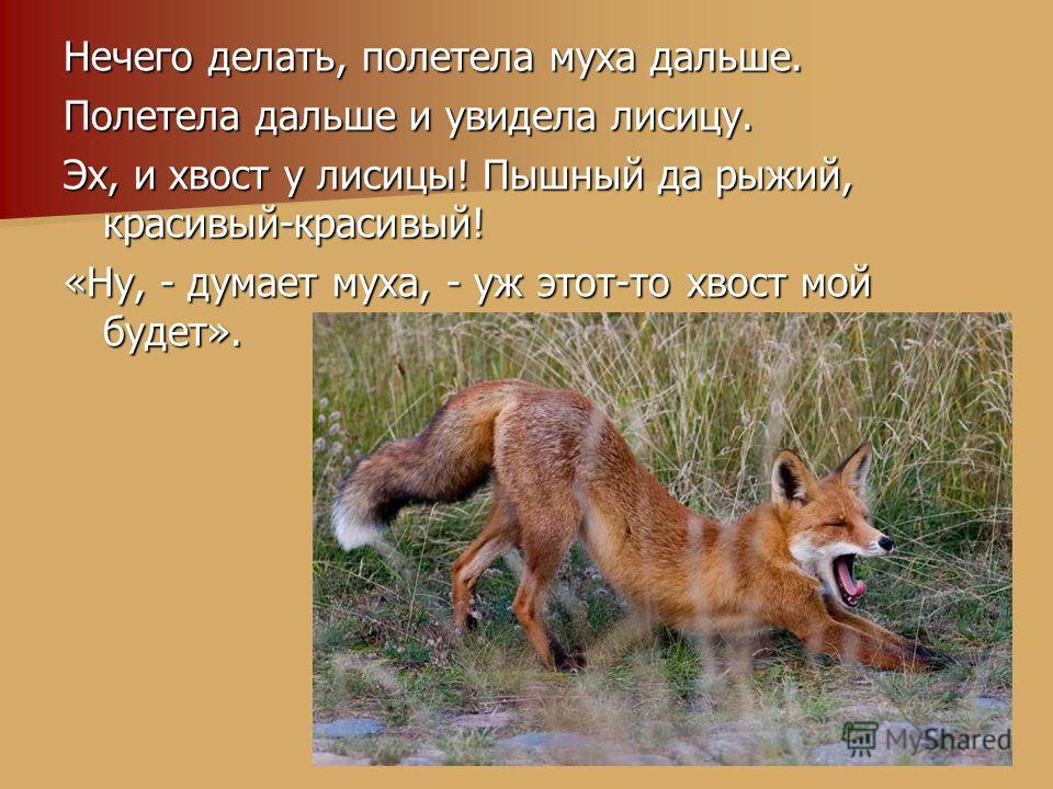 Нечего делать, полетела муха дальше. Полетела дальше и увидела лисицу. Эх, и хвост у лисицы! Пышный да рыжий, красивый-красивый! «Ну, - думает муха, - уж этот-то хвост мой будет».