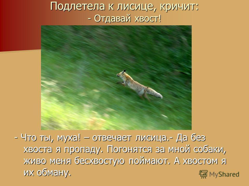 Подлетела к лисице, кричит: - Отдавай хвост! - Что ты, муха! – отвечает лисица.- Да без хвоста я пропаду. Погонятся за мной собаки, живо меня бесхвостую поймают. А хвостом я их обману.