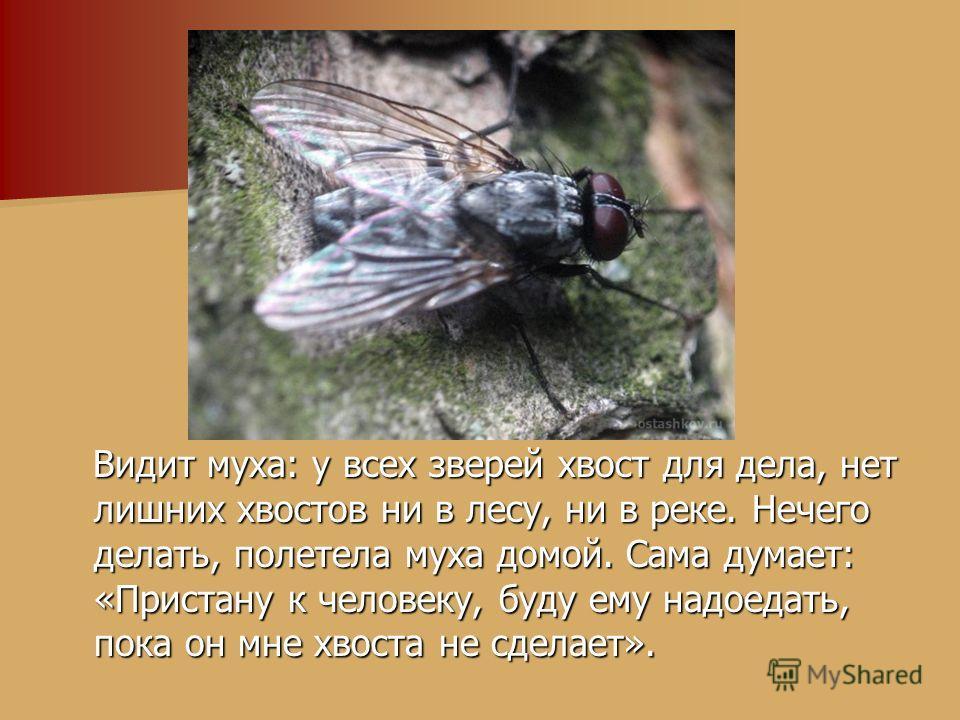 Видит муха: у всех зверей хвост для дела, нет лишних хвостов ни в лесу, ни в реке. Нечего делать, полетела муха домой. Сама думает: «Пристану к человеку, буду ему надоедать, пока он мне хвоста не сделает». Видит муха: у всех зверей хвост для дела, не