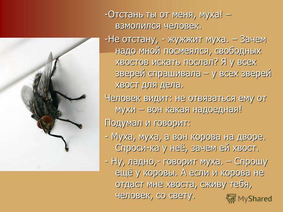 -Отстань ты от меня, муха! – взмолился человек. -Не отстану, - жужжит муха. – Зачем надо мной посмеялся, свободных хвостов искать послал? Я у всех зверей спрашивала – у всех зверей хвост для дела. Человек видит: не отвязаться ему от мухи – вон какая