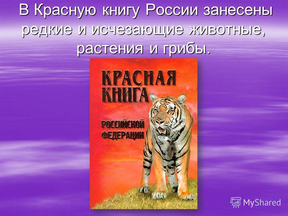 В Красную книгу России занесены редкие и исчезающие животные, растения и грибы. В Красную книгу России занесены редкие и исчезающие животные, растения и грибы.