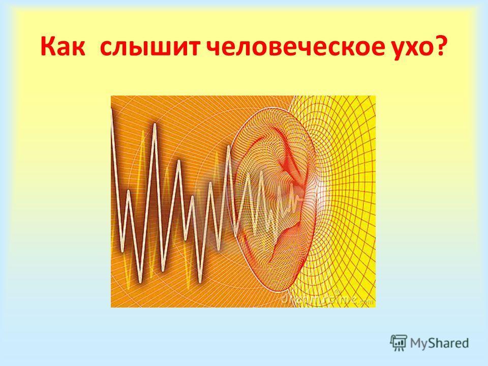 Как слышит человеческое ухо?