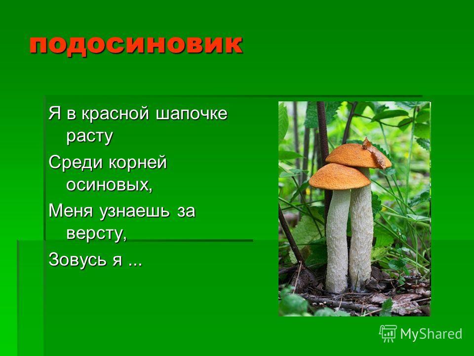 подосиновик Я в красной шапочке расту Среди корней осиновых, Меня узнаешь за версту, Зовусь я...