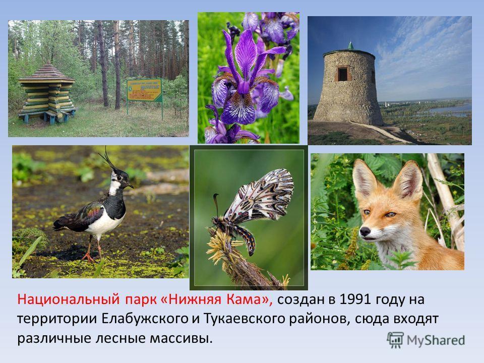 Национальный парк «Нижняя Кама», создан в 1991 году на территории Елабужского и Тукаевского районов, сюда входят различные лесные массивы.