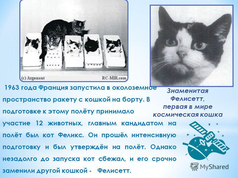Знаменитая Фелисетт, первая в мире космическая кошка 1963 года Франция запустила в околоземное пространство ракету с кошкой на борту. В подготовке к этому полёту принимало участие 12 животных, главным кандидатом на полёт был кот Феликс. Он прошёл инт
