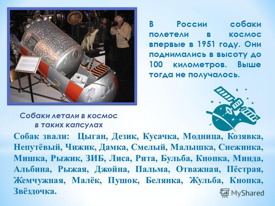 Собаки летали в космос в таких капсулах В России собаки полетели в космос впервые в 1951 году. Они поднимались в высоту до 100 километров. Выше тогда не получалось. Собак звали: Цыган, Дезик, Кусачка, Модница, Козявка, Непутёвый, Чижик, Дамка, Смелый