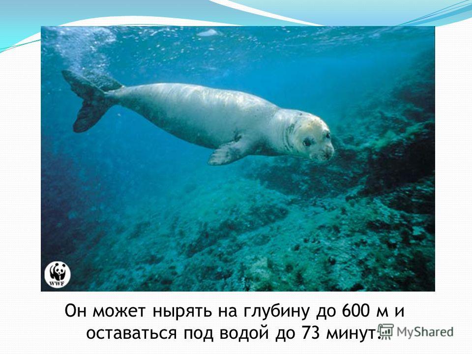 Он может нырять на глубину до 600 м и оставаться под водой до 73 минут.