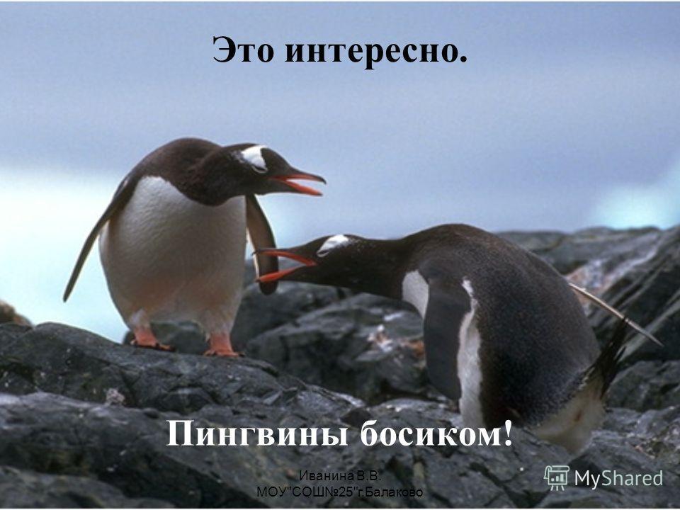 Иванина В.В. МОУСОШ25г.Балаково Собери картинку!