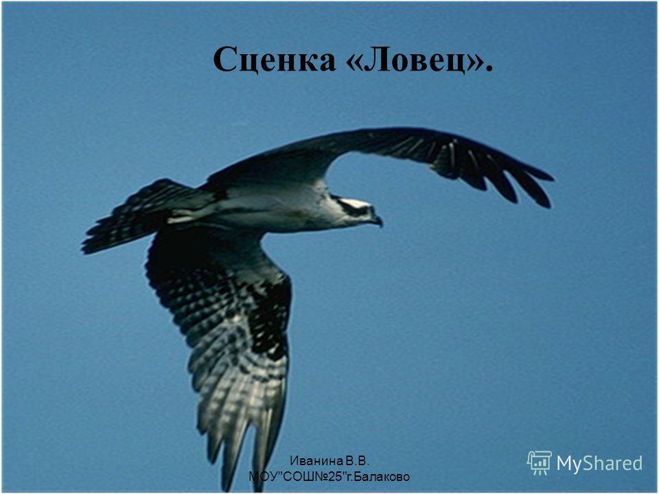 Иванина В.В. МОУСОШ25г.Балаково Гонки на страусах. Страусы могут развивать скорость до 50 км в час.