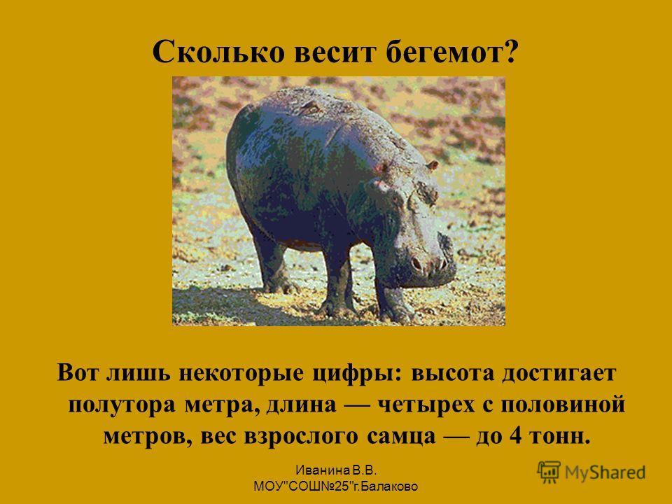 Иванина В.В. МОУСОШ25г.Балаково