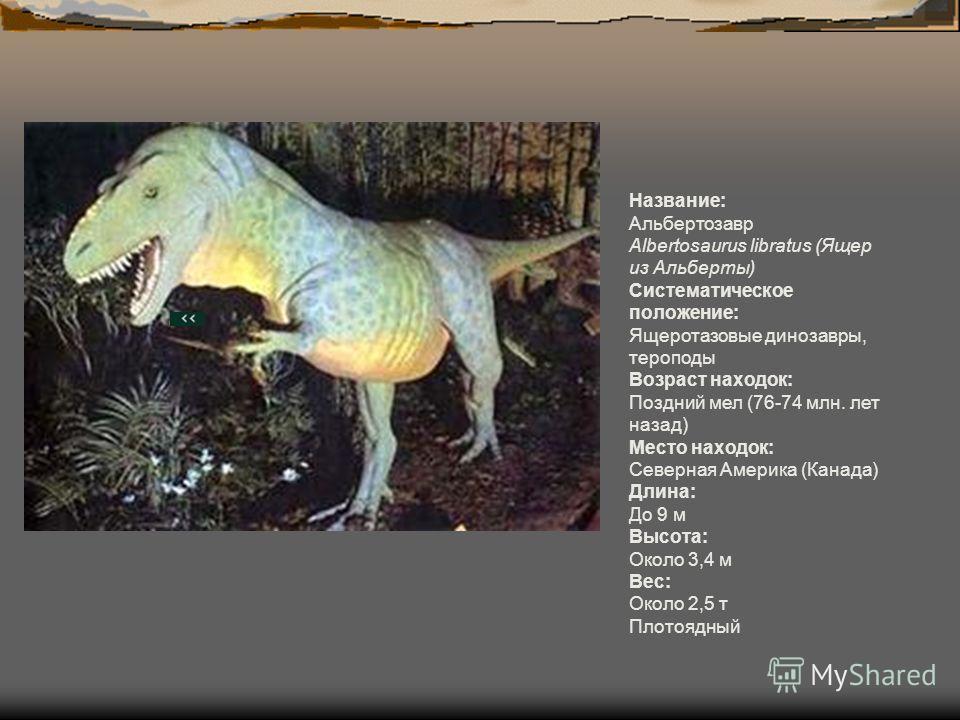 Название: Альбертозавр Albertosaurus libratus (Ящер из Альберты) Систематическое положение: Ящеротазовые динозавры, тероподы Возраст находок: Поздний мел (76-74 млн. лет назад) Место находок: Северная Америка (Канада) Длина: До 9 м Высота: Около 3,4