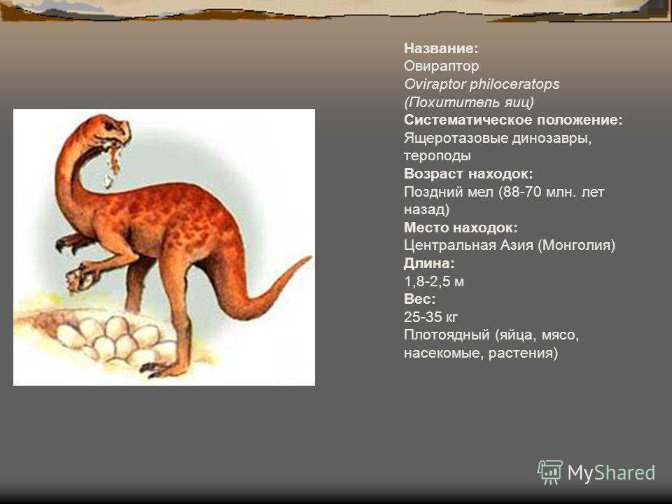 Название: Овираптор Oviraptor philoceratops (Похититель яиц) Систематическое положение: Ящеротазовые динозавры, тероподы Возраст находок: Поздний мел (88-70 млн. лет назад) Место находок: Центральная Азия (Монголия) Длина: 1,8-2,5 м Вес: 25-35 кг Пло