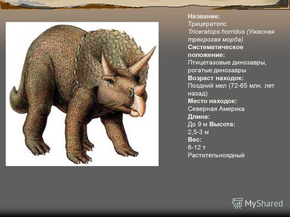 Название: Трицератопс Triceratops horridus (Ужасная трехрогая морда) Систематическое положение: Птицетазовые динозавры, рогатые динозавры Возраст находок: Поздний мел (72-65 млн. лет назад) Место находок: Северная Америка Длина: До 9 м Высота: 2,5-3