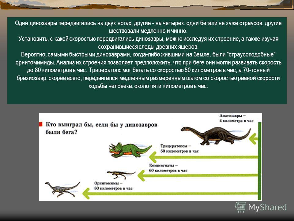 Одни динозавры передвигались на двух ногах, другие - на четырех, одни бегали не хуже страусов, другие шествовали медленно и чинно. Установить, с какой скоростью передвигались динозавры, можно исследуя их строение, а также изучая сохранившиеся следы д