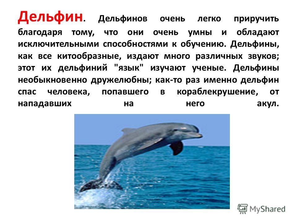 Дельфин. Дельфинов очень легко приручить благодаря тому, что они очень умны и обладают исключительными способностями к обучению. Дельфины, как все китообразные, издают много различных звуков; этот их дельфиний