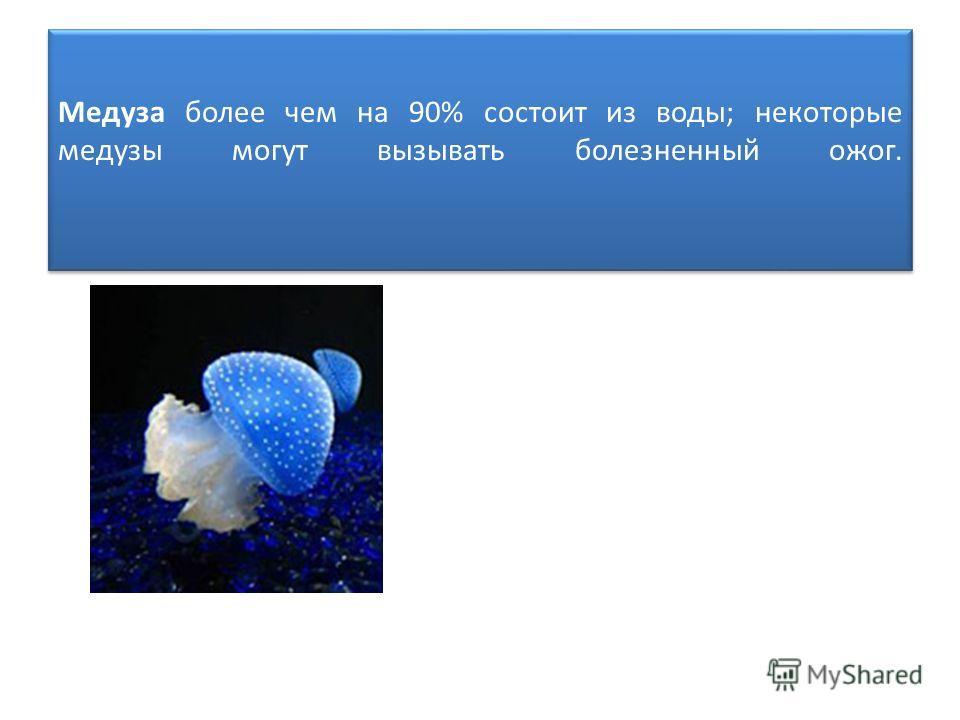 Медуза более чем на 90% состоит из воды; некоторые медузы могут вызывать болезненный ожог.