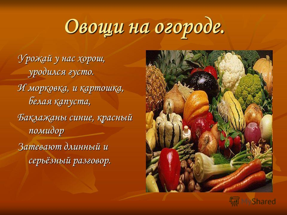 Овощи на огороде. Урожай у нас хорош, уродился густо. И морковка, и картошка, белая капуста, Баклажаны синие, красный помидор Затевают длинный и серьёзный разговор.