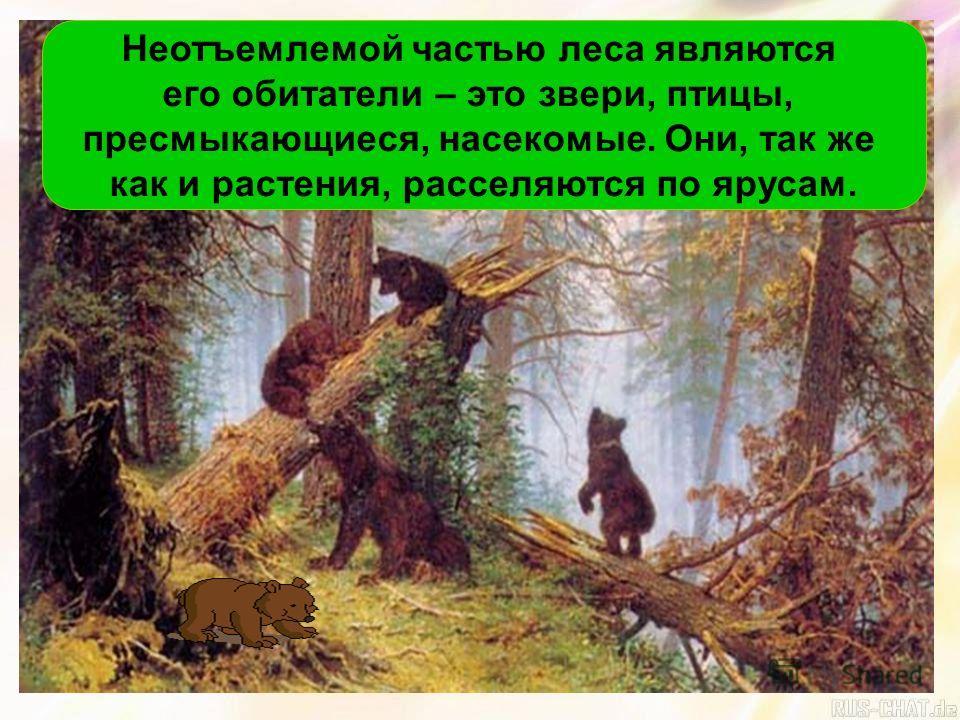 Неотъемлемой частью леса являются его обитатели – это звери, птицы, пресмыкающиеся, насекомые. Они, так же как и растения, расселяются по ярусам.