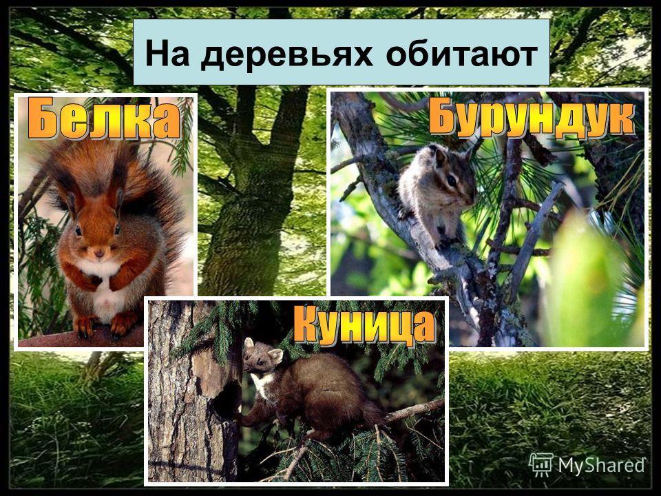 На деревьях обитают