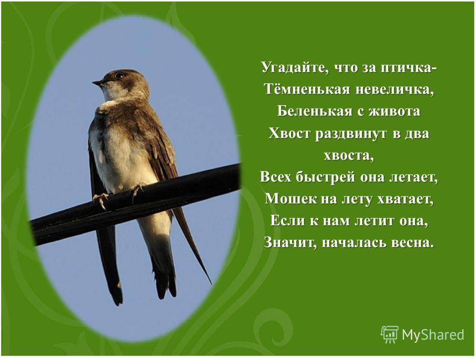 Угадайте, что за птичка- Тёмненькая невеличка, Беленькая с живота Хвост раздвинут в два хвоста, Всех быстрей она летает, Мошек на лету хватает, Если к нам летит она, Значит, началась весна.
