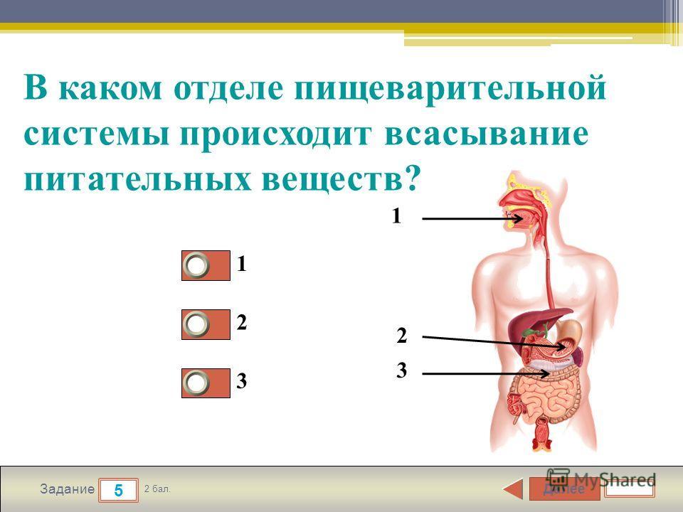 Далее 5 Задание 2 бал. В каком отделе пищеварительной системы происходит всасывание питательных веществ? 1 2 3 1 3 2