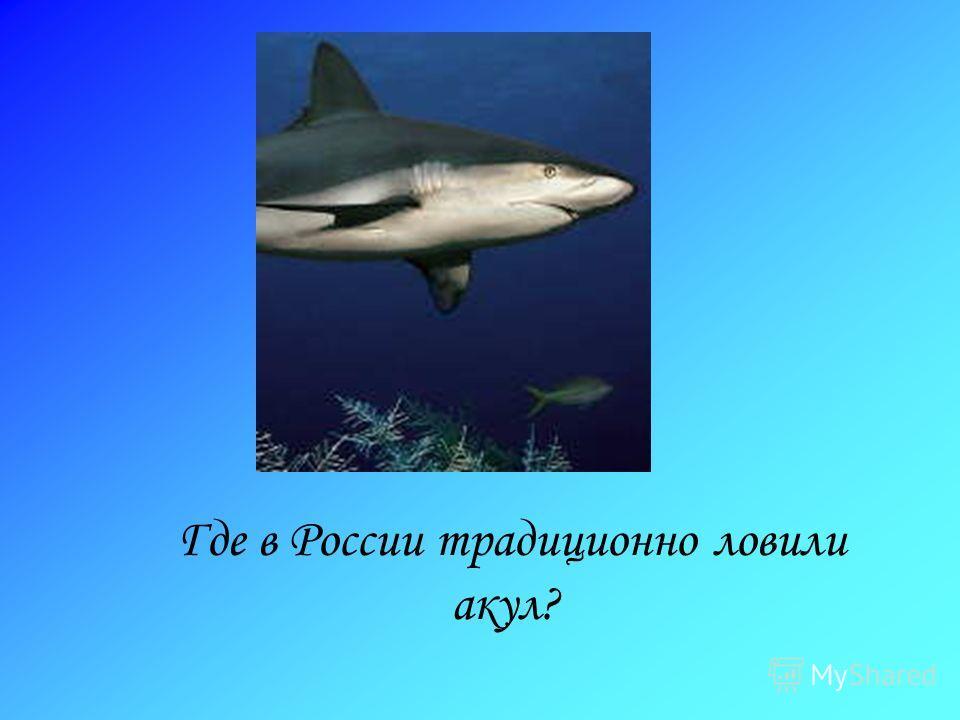Где в России традиционно ловили акул?