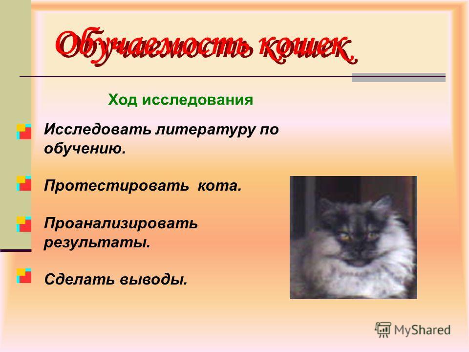 Обучаемость кошек Исследовать литературу по обучению. Протестировать кота. Проанализировать результаты. Сделать выводы. Ход исследования