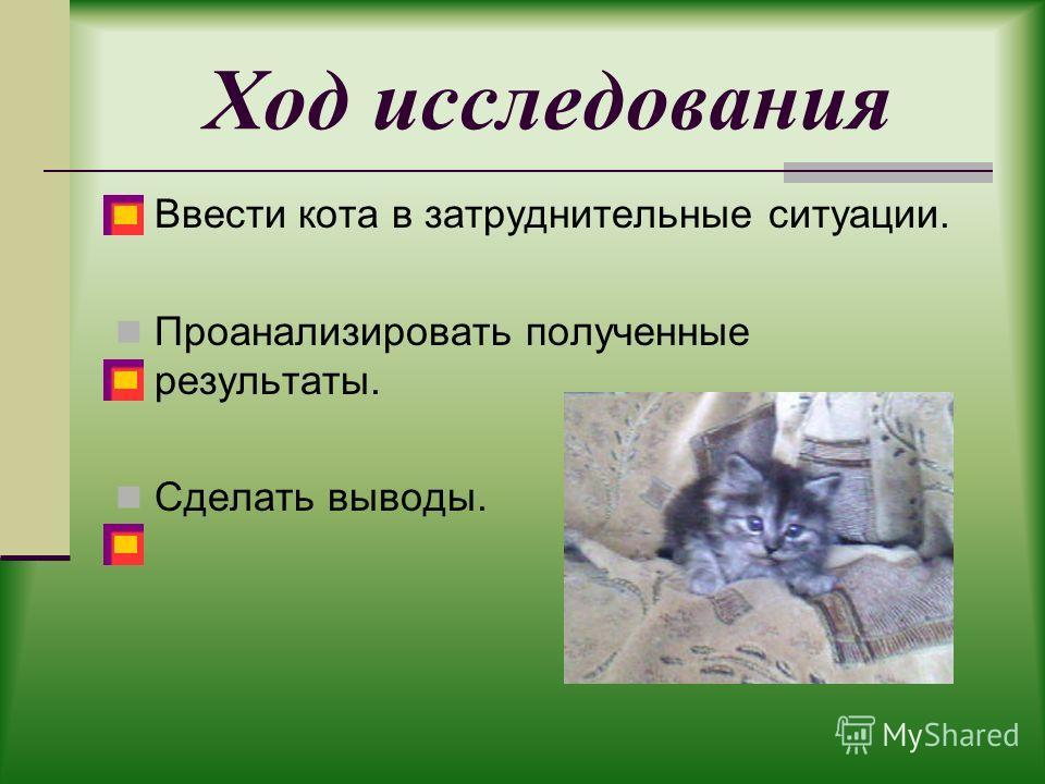 Ход исследования Ввести кота в затруднительные ситуации. Проанализировать полученные результаты. Сделать выводы.