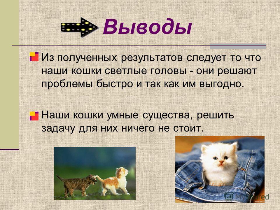 Выводы Из полученных результатов следует то что наши кошки светлые головы - они решают проблемы быстро и так как им выгодно. Наши кошки умные существа, решить задачу для них ничего не стоит.