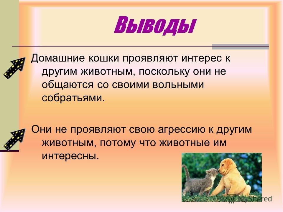Выводы Домашние кошки проявляют интерес к другим животным, поскольку они не общаются со своими вольными собратьями. Они не проявляют свою агрессию к другим животным, потому что животные им интересны.