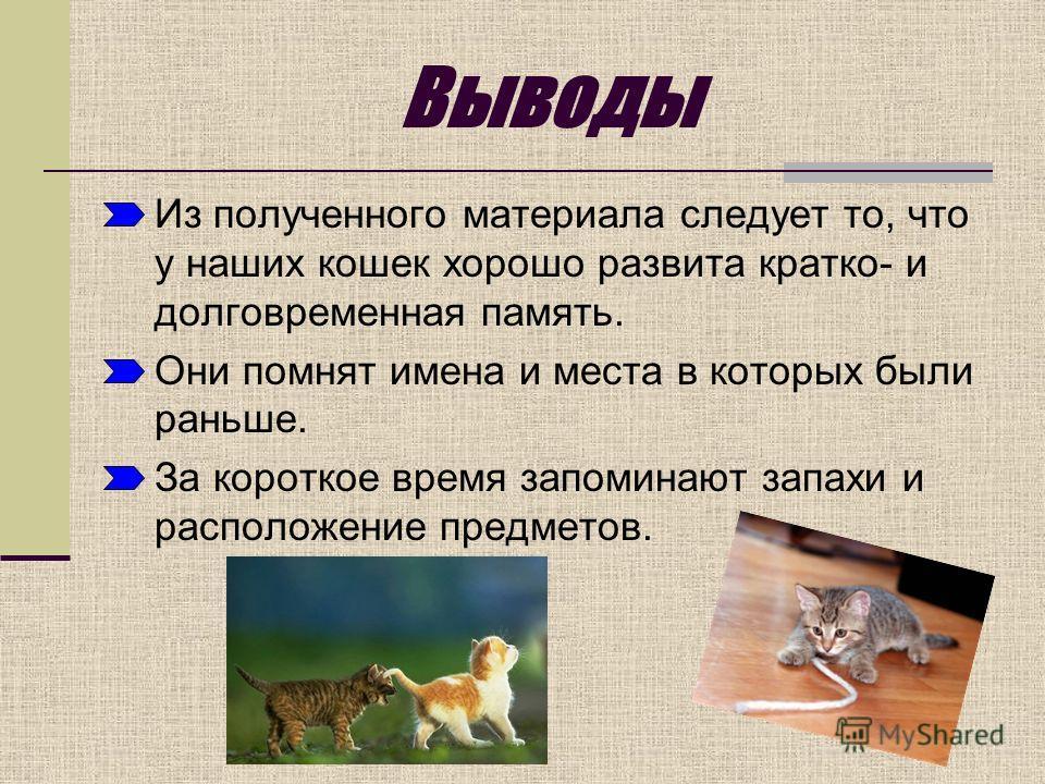 Выводы Из полученного материала следует то, что у наших кошек хорошо развита кратко- и долговременная память. Они помнят имена и места в которых были раньше. За короткое время запоминают запахи и расположение предметов.