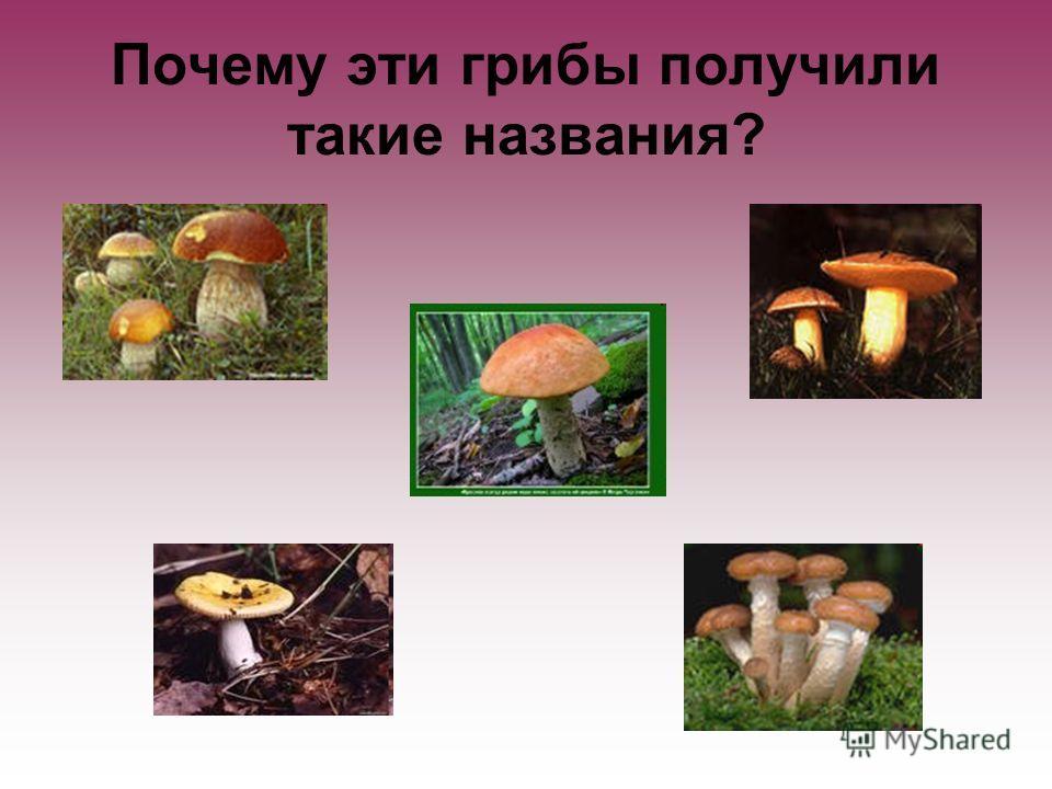 Почему эти грибы получили такие названия?