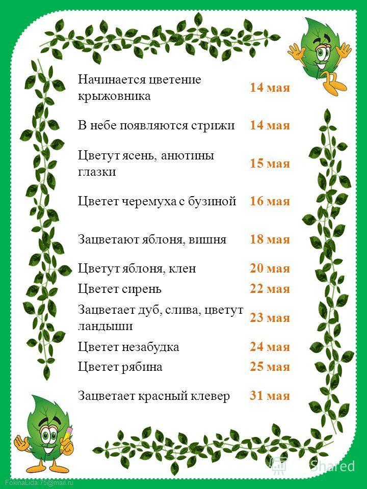 FokinaLida.75@mail.ru Начинается цветение крыжовника 14 мая В небе появляются стрижи 14 мая Цветут ясень, анютины глазки 15 мая Цветет черемуха с бузиной 16 мая Зацветают яблоня, вишня 18 мая Цветут яблоня, клен 20 мая Цветет сирень 22 мая Зацветает