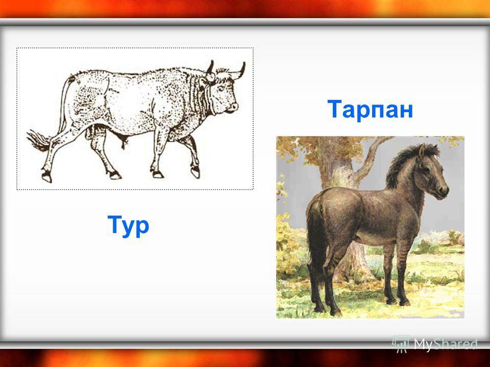 Тарпан Тур