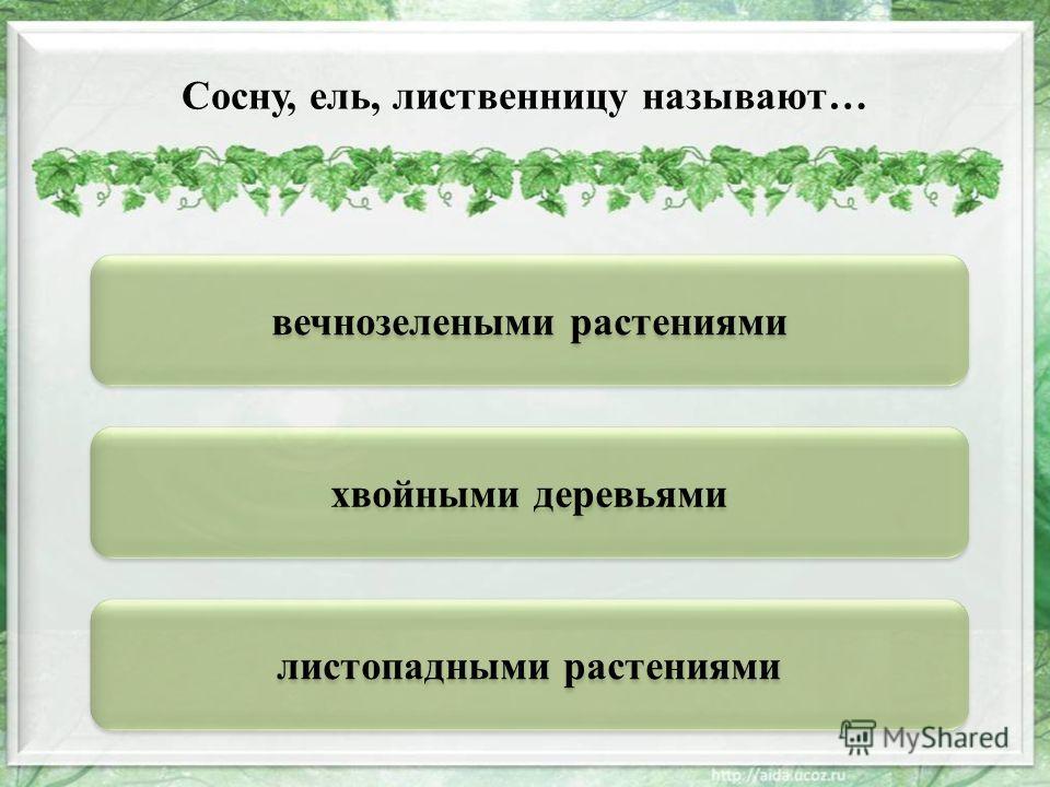 хвойными деревьями вечнозелеными растениями листопадными растениями Сосну, ель, лиственницу называют…