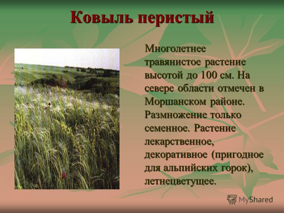 Ковыль перистый Многолетнее травянистое растение высотой до 100 см. На севере области отмечен в Моршанском районе. Размножение только семенное. Растение лекарственное, декоративное (пригодное для альпийских горок), летнецветущее. Многолетнее травянис