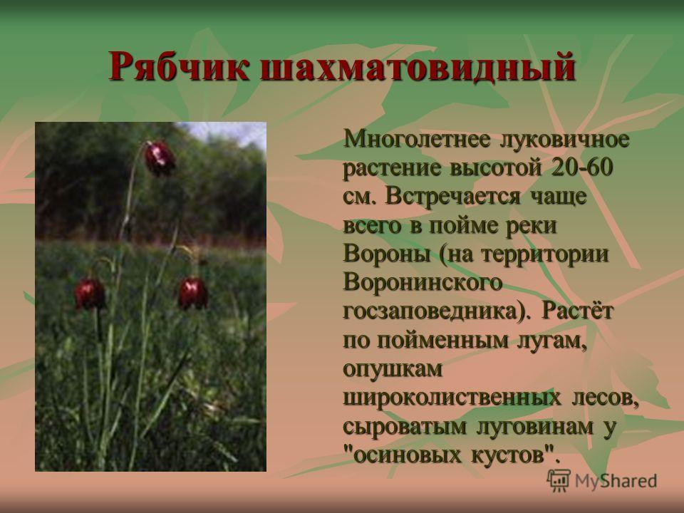 Рябчик шахматовидный Многолетнее луковичное растение высотой 20-60 см. Встречается чаще всего в пойме реки Вороны (на территории Воронинского госзаповедника). Растёт по пойменным лугам, опушкам широколиственных лесов, сыроватым луговинам у