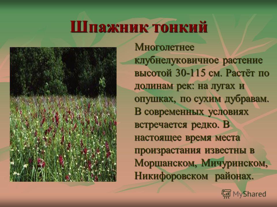 Шпажник тонкий Многолетнее клубнелуковичное растение высотой 30-115 см. Растёт по долинам рек: на лугах и опушках, по сухим дубравам. В современных условиях встречается редко. В настоящее время места произрастания известны в Моршанском, Мичуринском,