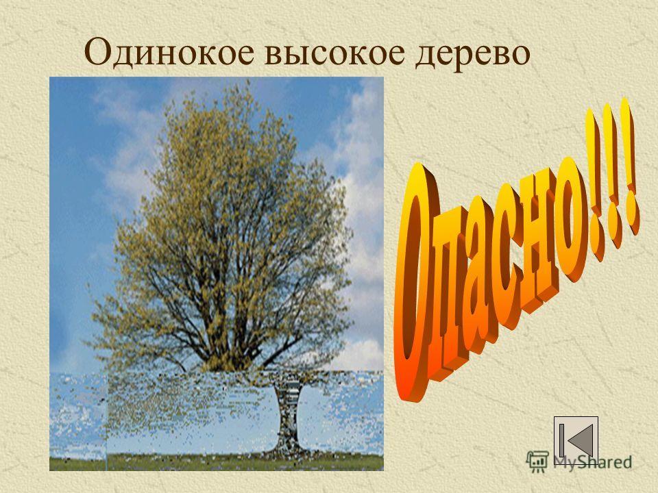 Одинокое высокое дерево