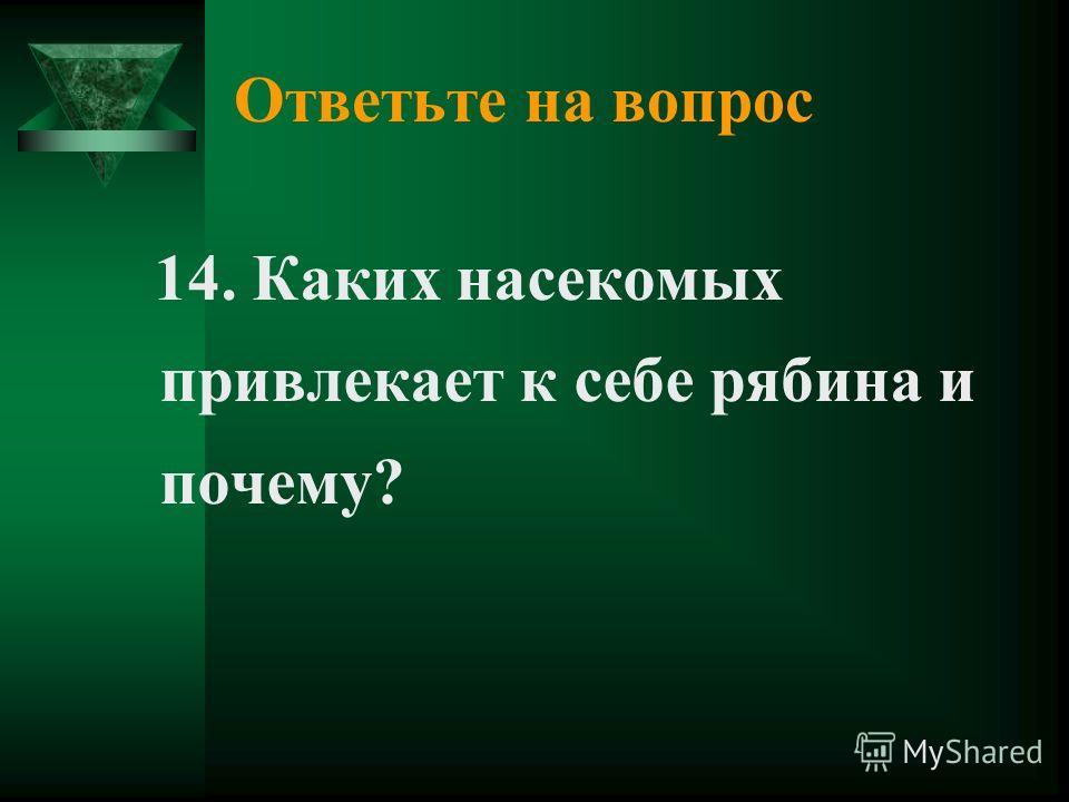 Ответьте на вопрос 14. Каких насекомых привлекает к себе рябина и почему?